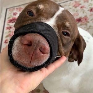 Dogs muzzle